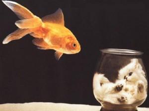 Рыбка и котенок