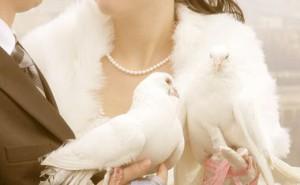 Белая голубка ч.3 гл.43